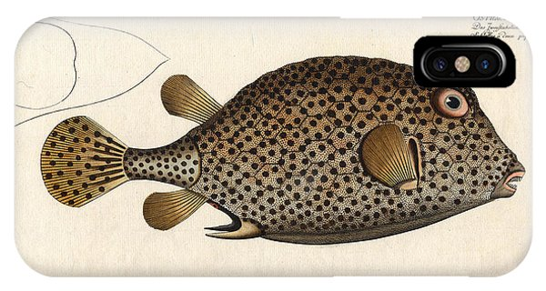 Reef Diving iPhone Case - Spotted Trunk Fish  by Antique Images