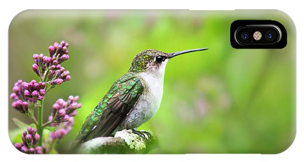 Humming Bird iPhone Case - Spring Beauty Ruby Throat Hummingbird by Christina Rollo