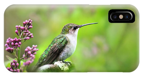 Spring Beauty Ruby Throat Hummingbird IPhone Case