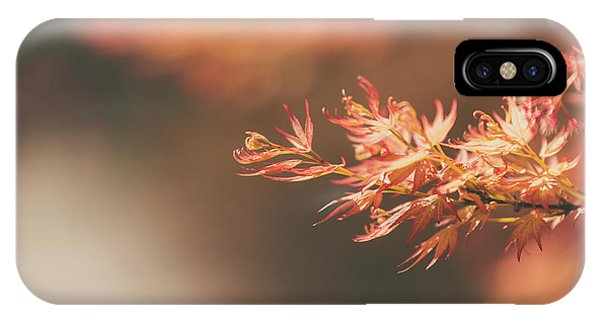 Spring Or Fall IPhone Case