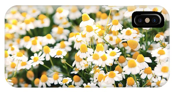 Sun Rays iPhone Case - Spring White Daisy Flowers In Nature In by Katerina Planina