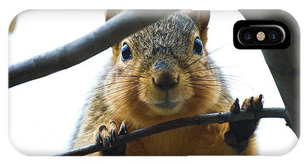 Spying Fox Squirrel IPhone Case