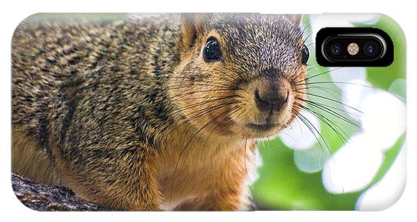 Squirrel Close Up IPhone Case