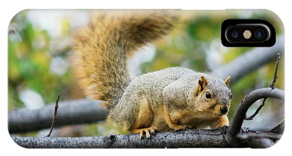 Squirrel Crouching On Tree Limb IPhone Case
