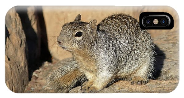 Squirrel IPhone Case