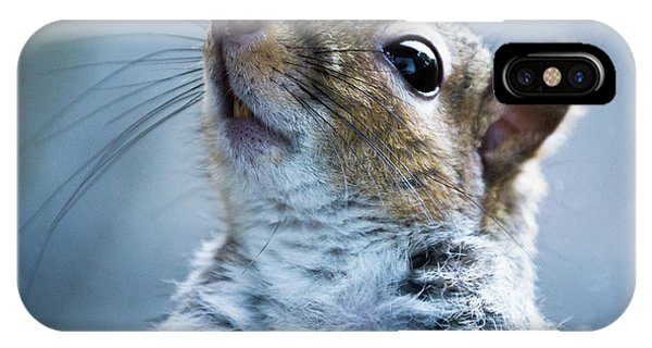Squirrel With Nose In The Air IPhone Case