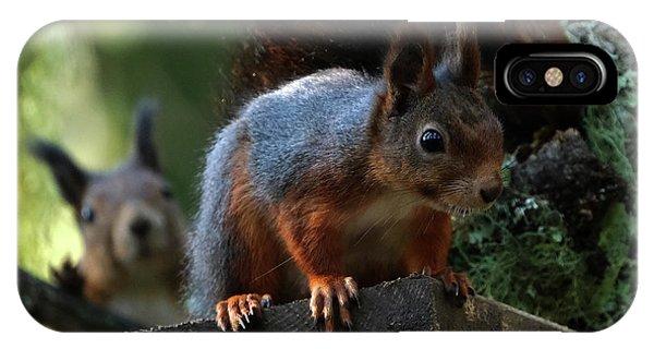 Squirrels IPhone Case