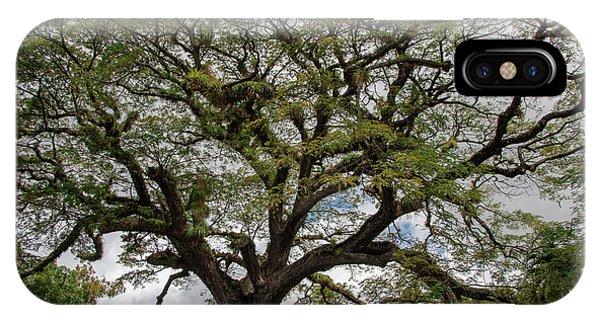 St. Kitts Saman Tree IPhone Case