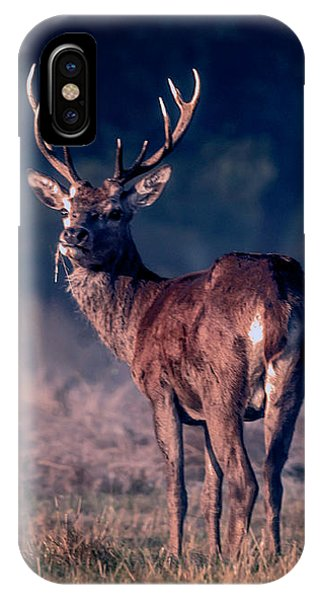 Stag Eating IPhone Case