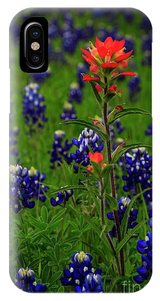 Scarlet Paintbrush iPhone Case - Stand Above The Crowd by Phyllis Webster