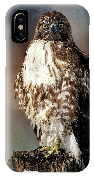Stare Down With A Hawk IPhone Case