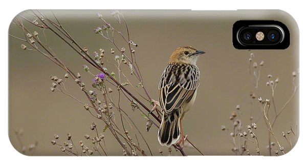 IPhone Case featuring the photograph Stout Cisticola by Thomas Kallmeyer