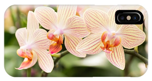 Botany iPhone Case - Streaked Orchid Flowers. Beautiful by Pojvistaimage