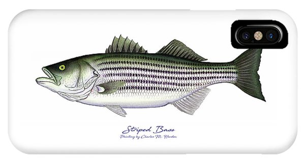 Tidal iPhone Case - Striped Bass by Charles Harden