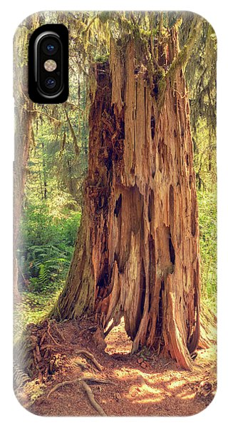Stump In The Rainforest IPhone Case