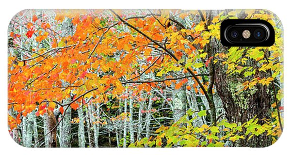 iPhone Case - Sugar Maple Acer Saccharum In Autumn by Panoramic Images
