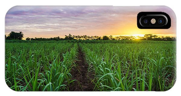 Ripe iPhone Case - Sugarcane Field At Sunset by Amornchaijj