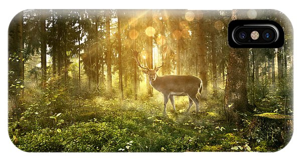 Deciduous iPhone Case - Sun Shines Into A Fairytale Forest by Lassedesignen