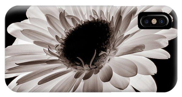 Sunflower Seeds iPhone Case - Sunburst by Dave Bowman