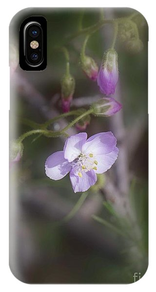 IPhone Case featuring the photograph Sundew by Elaine Teague