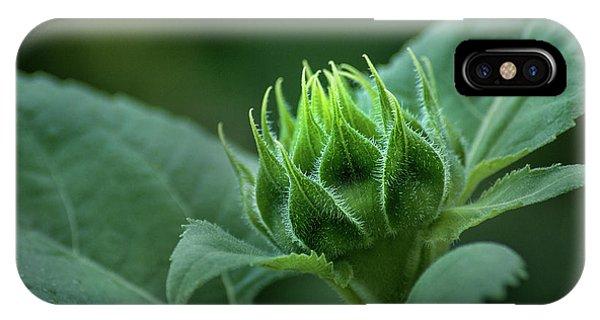 Sunflower Bud IPhone Case