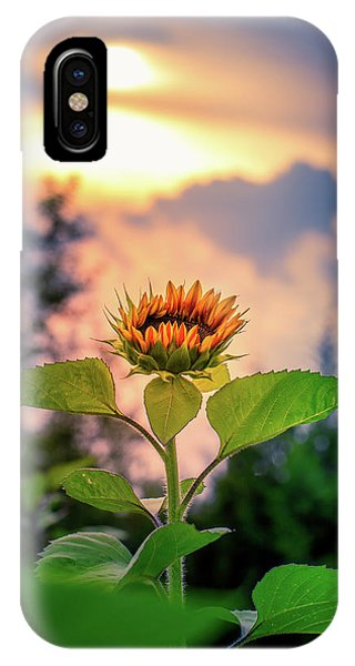 Sunflower Opening To The Light IPhone Case