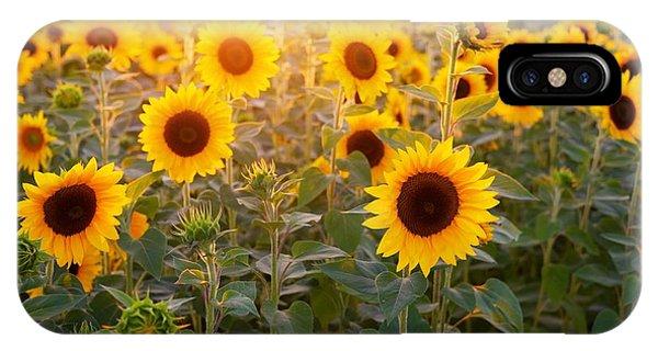 Sunflowers Field IPhone Case