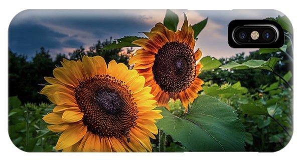 Sunflowers In Evening IPhone Case