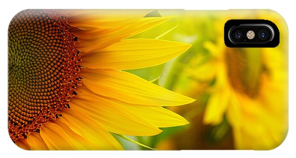 Sunflower Seeds iPhone Case - Sunflowers by Sj Travel Photo And Video