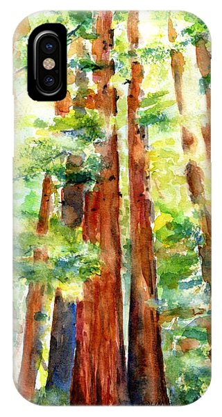Sunlight Through Redwood Trees IPhone Case