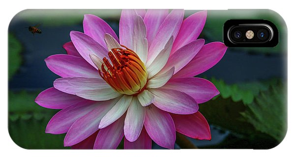 IPhone Case featuring the photograph Sunlit Lily by Tom Claud