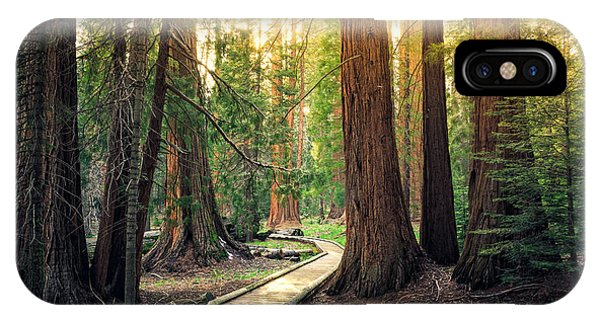 Hiking Path iPhone Case - Sunset On The Forest Path, Sequoia by Stephen Moehle