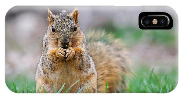 Super Cute Fox Squirrel IPhone Case