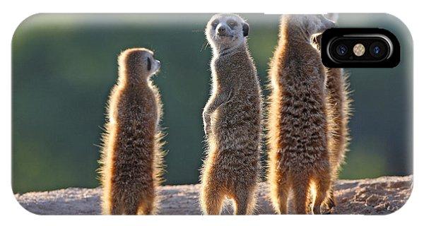 Adult iPhone Case - Surricate Meerkats Standing Upright by Erwin Niemand