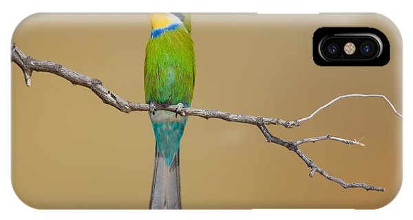 Bee iPhone X Case - Swallow-tailed Bee-eater Merops by Johan Swanepoel