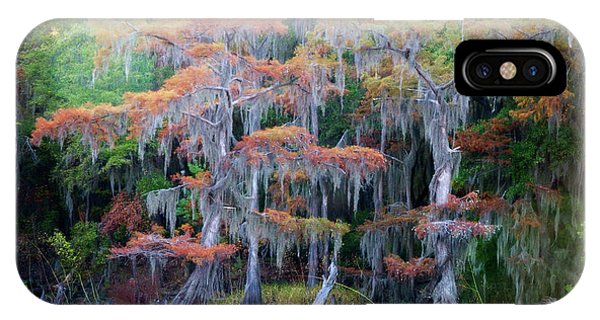 Bald Cypress iPhone Case - Swamp Dance by Lana Trussell