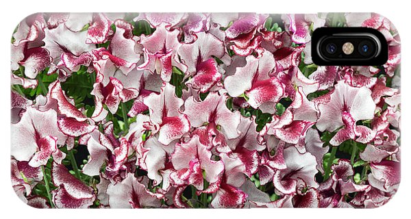 IPhone Case featuring the photograph Sweet Pea Lisa Marie Flowers by Tim Gainey