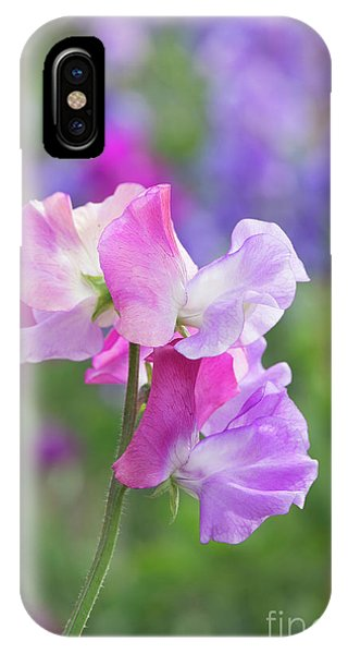 IPhone Case featuring the photograph Sweet Pea Prima Ballerina Flower Portrait by Tim Gainey
