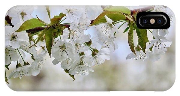 iPhone Case - Sweet White Cherry Blossoms by Carol Groenen