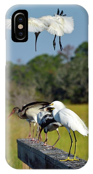 Swooping In For A Landing IPhone Case
