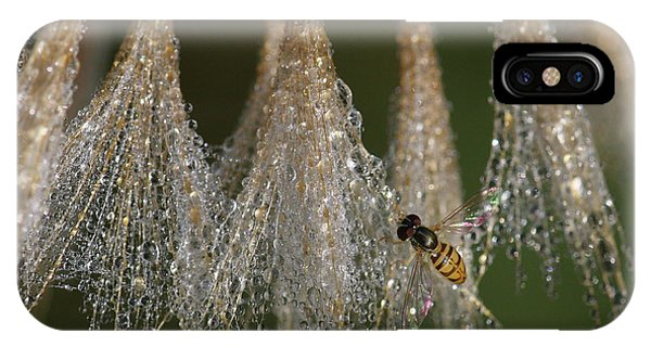 IPhone Case featuring the photograph Syrphid Fly On A Dewy Morn by Daniel Reed