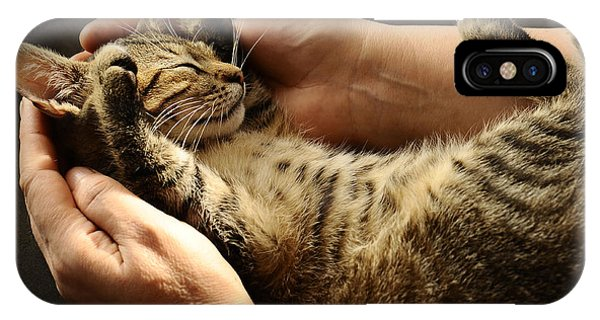 Cute Kitten iPhone Case - Tabby Cat In The Hands Of The Owner by Gornostay