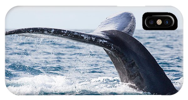Tail Of Whalewhale Show The Tail Above Phone Case by Kirill Dorofeev