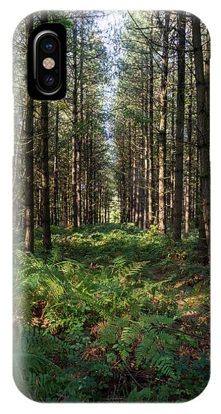Tall Trees In Sherwood Forest IPhone Case