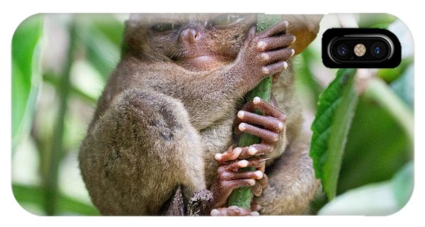 Small iPhone Case - Tarsier Sleeping In A Tree At Bohol by Jonnysat12