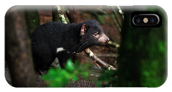 IPhone Case featuring the photograph Tasmanian Devil Found During The Day In Tasmania. by Rob D
