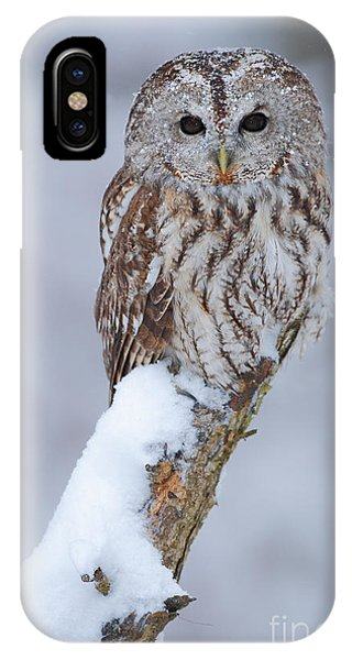 Swedish iPhone Case - Tawny Owl Covered With Snow. Wildlife by Ondrej Prosicky