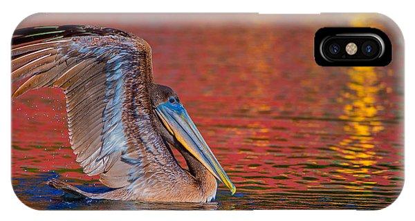 Tchefuncte Pelican IPhone Case