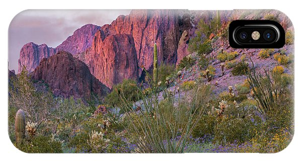 Cylindropuntia Bigelovii iPhone Case - Teddy Bear Cholla And Saguaro, Kofa by