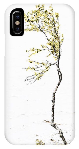 The Birch Tree IPhone Case